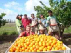 Fruit Picking Jobs Abroad